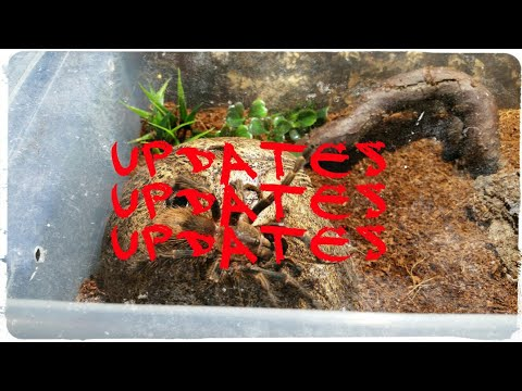 Tarantula Updates: The new additions, rehoused ts and a death.