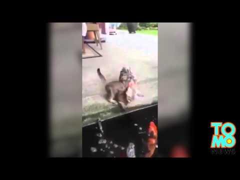 VIDEO: Isang pusa, muntikan nang maging merienda ng isang isda!