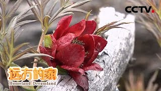 《远方的家》 20200407 世界遗产在中国 三江并流——秘境花园  CCTV中文国际