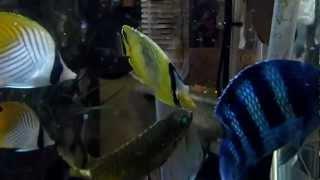 魚種名稱:黃網鰈魚