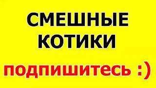 СМЕШНЫЕ КОТЫ 2015   Лучшая Подборка Приколов 91 ПРИКОЛЬНЫЕ КОШКИ   Супер ВИДЕО
