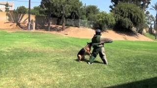 Falco K9 Academy - Bite Work Video 2012