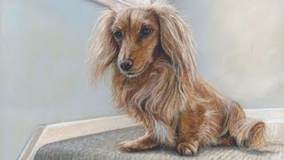 Speed Painting A Dachshund Dog In Pastels On Velour