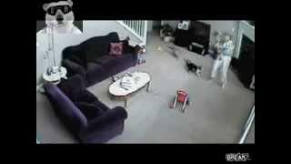 Видео «Кот напал на девушку»