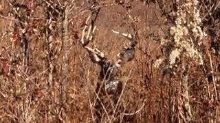 10 Deer Down - Tennessee Deer Season 2012-13