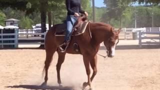 Jenna Beare: NCAA Equestrian Horsemanship Recruitment