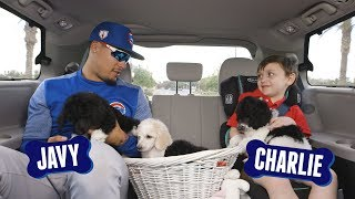 Javy Báez Answers Questions with Puppies | Cubs and Pups