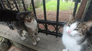 Two cats are so lovely, they want love and attention