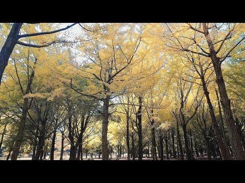 Autumn in Yoyogi Park, Tokyo - Long Take【東京・代々木公園】 4K