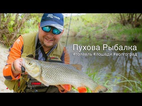 Ловля голавля в Волгоградской области. ПР:#1