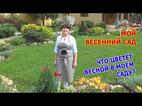 Весенний сад в Подмосковье. Что цветет в моем саду весной? ВЛОГ из МОЕГО САДА.