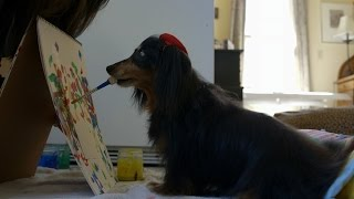 Blind Dog Learns to Paint