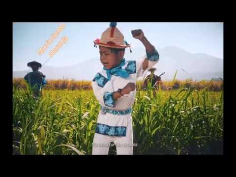Movimiento Naranja Karaoke/ Movimiento Ciudadano D.A.R