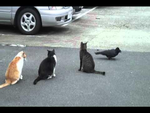 谷中猫400態-No376「カラスと猫」/Crow and cat