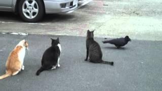 谷中猫400態 No376「カラスと猫」Crow And Cat