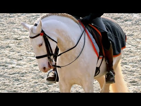 Horses - Academy Of Spectacle Equestre, Versailles / Caballos - Academia ecuestre de Versalles