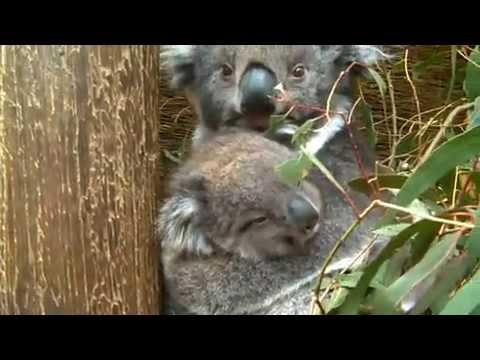 Ballarat Wildlife Park, Victoria Australia