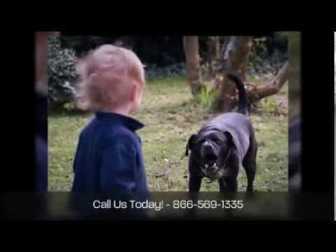 Indiana Dog Bite Attorneys Crossen Kooi Law