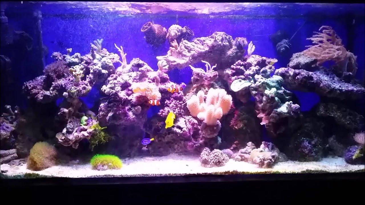 Notre Aquarium 240 L Youtube