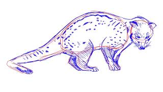 How to draw an Asian palm civet