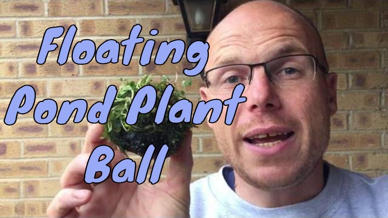 How to make a floating pond plant ball - DIY Floating Island for Pond