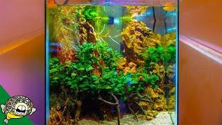 Planted Tank Fish Room Tour - I'm Jealous!