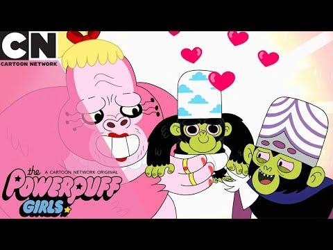 The Powerpuff Girls | Mojo Jojo Falls in Love | Cartoon Network