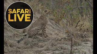 safariLIVE - Sunrise Safari - 2018, 17. June