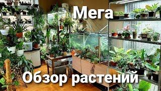 Мега обзор растений  июнь 2021