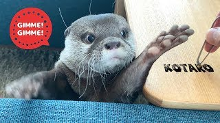 Kotaro the Otter Makes a Cute Squeaky Noise