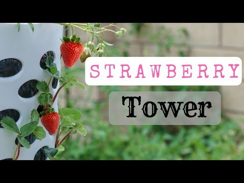 Strawberry Tower using a $7 laundry basket