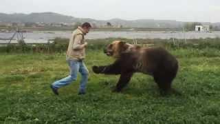 BROWN BEAR. FUNNY ANIMAL.