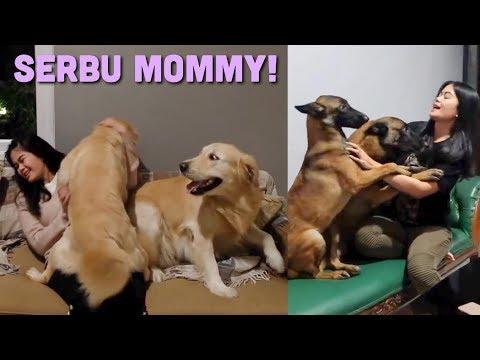 REAKSI ANABUL DITINGGAL MOMMY 10 HARI KE AUSSIE!