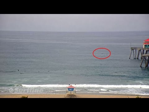 Small Shark Breach Caught On HB Pier South Side Cam