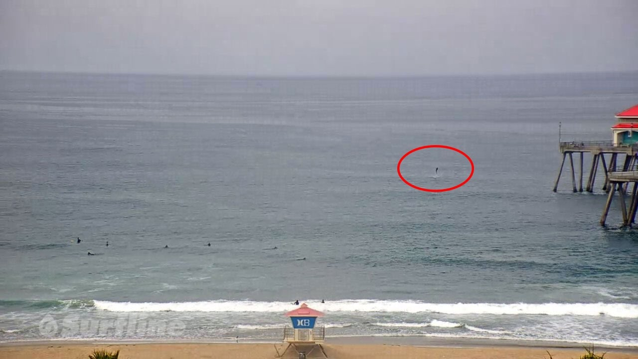Small shark breach caught on hb pier south side cam youtube for Huntington beach pier fishing