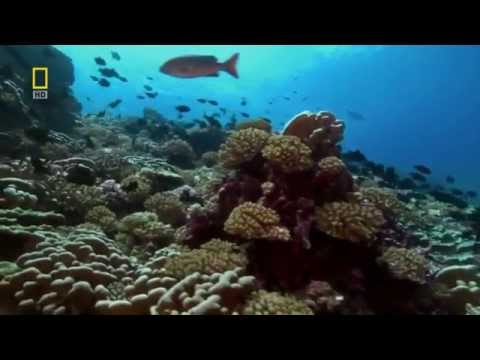 Pacific Ocean Paradise Nature Documentary