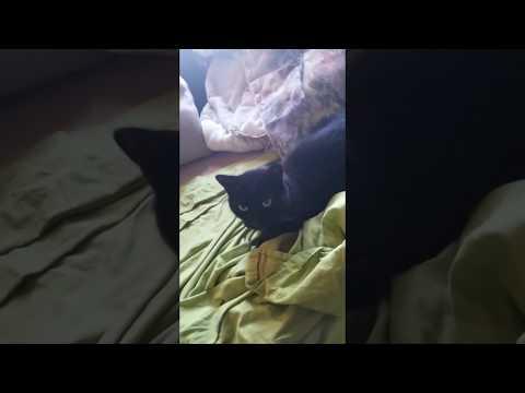 فيديو القط اللاحس