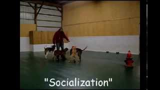 The Dog Guru, Inc Video Ii Basic Obedience And Enrichment