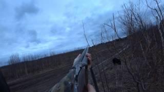 Весенняя охота на вальдшнепа на тяге 2017