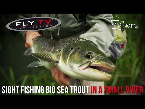 FLY TV - Sight Fishing Big Sea Trout in a Small River