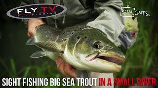 fly tv sight fishing big sea trout in a small river