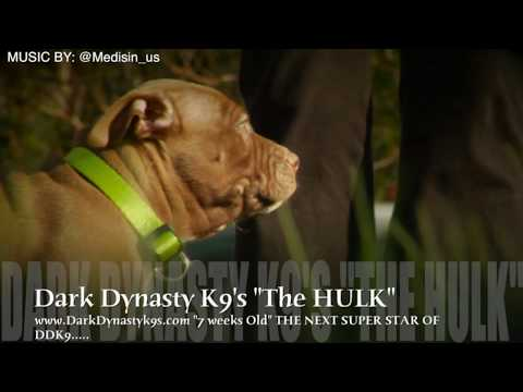 Just work! THE GENERAL pit bulls in training