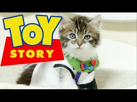Disney Pixar's Toy Story (Cute Kitten Version)