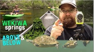 WEKIWA SPRINGS FLORIDA - ABOVE AND BELOW THE WATER! - Matt