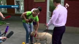 Задержана женщина, похитившая собаку поводыря у слепой москвички