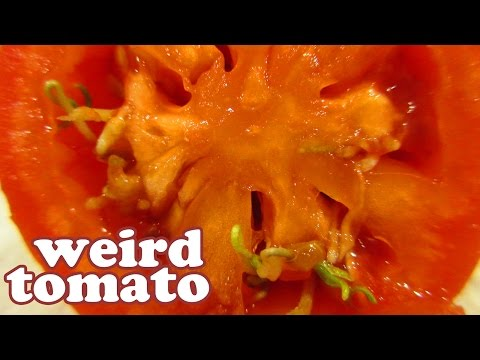 Tomato Plant Diseases - GMO Foods? Genetically Modified Food? Growing Tomatoes From Seeds - Jazevox
