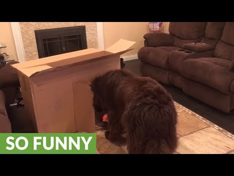 How to tie a top knot on a Maltese dog! Cute! from YouTube · Duration:  4 minutes 32 seconds