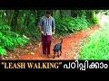 dog training :