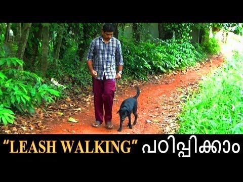 dog training : ' Leash walking'  Malayalam:kerala dog training : വളര്ത്തു നായയെ പരിശീലിപ്പിക്കാം