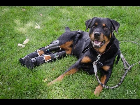 So Happy Dogs With Prosthetic Legs#Newest (funny&cute ...